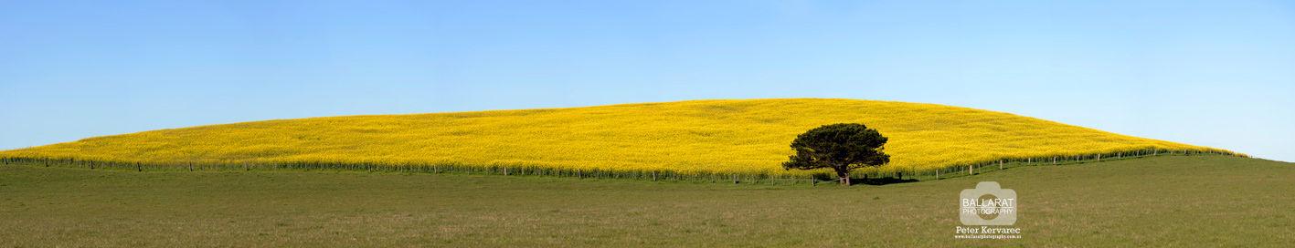 Ballarat Photography Landscape Panorama Scene