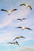Ballarat Bird life