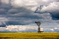Ballarat Farming Agriculture Canola Crop and Clouds