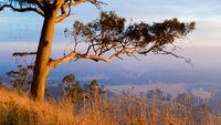 Ballarat Photography Peter Kervarec
