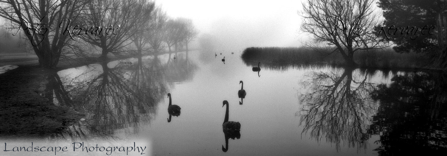 Ballarat Photography, Lake Wendouree, Ballarat Swans in Winter at Fairyland, Film 1996, Ballarat Icon
